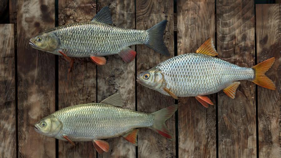 Игра о рыбалке Professional fishing