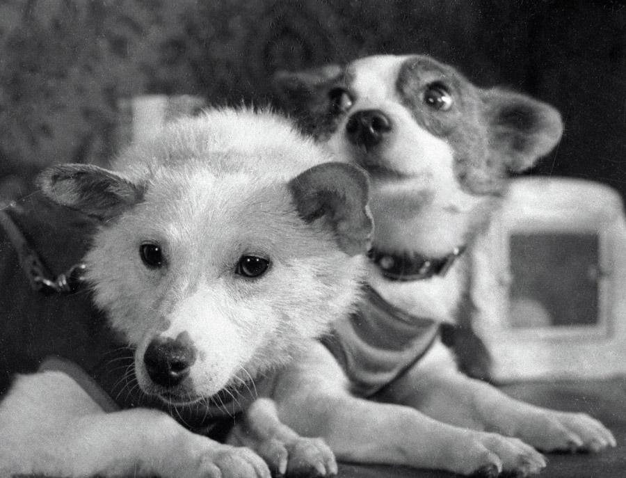 Легендарные космические собаки Белка и Стрелка